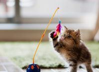 Buying gifts for your cat