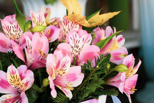 Affordable Flower Delivery